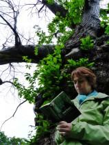 Lis sous ton arbre !